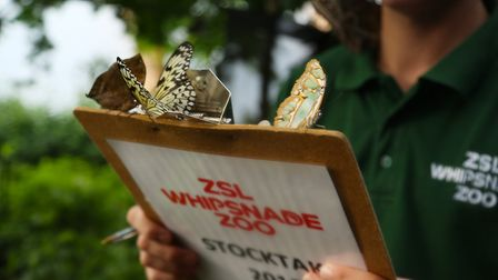 A butterfly perched on a clipboard at ZSL Whipsnade Zoo. Photo: ZSL Whipsnade Zoo.