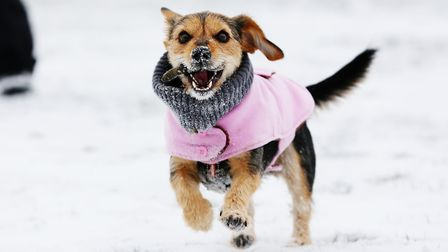 A dog enjoys the snow in Herts. Could we have more this weekend? Picture: Danny Loo