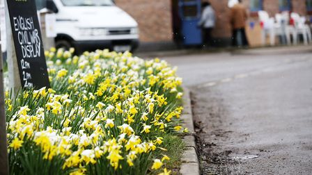 The Thriplow Daffodil Weekend. Picture: Danny Loo