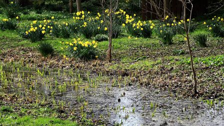 Picturesque Thriplow is the setting for the daffodil festival. Picture: Clive Porter
