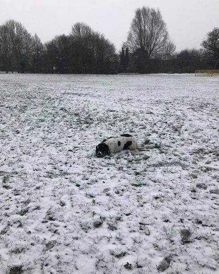 One dog enjoyig laying in the snow. Picture: Hannah Mills.