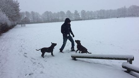 Beau and Kobi frollicking at Shenley Lane Playing Fields. Picture: Georgie London.