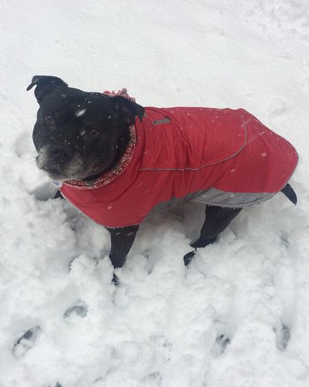 Eight-year-old Kiya playing in the snow in Bricket Road, St Albans while wrapped up warm with her co