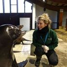 Kirstie Skinner with the seals. Picture: ZSL Whipsnade