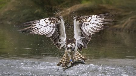 'Catch of the Day' by Peter Whitehead.