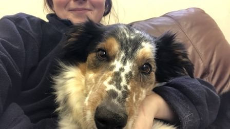 Six-year-old tricolour border collie Duke was given his first bath in years by RSPCA staff. Picture: