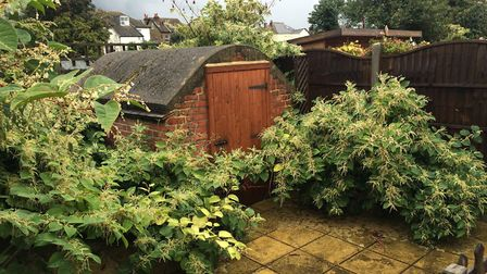 The RHS recommends using a professional firm to eradicate Japanese knotweed (Credit: Environet/PA)