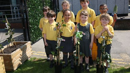 Pupils from reception class to year five at Alban City School plant ivy outside their school to crea