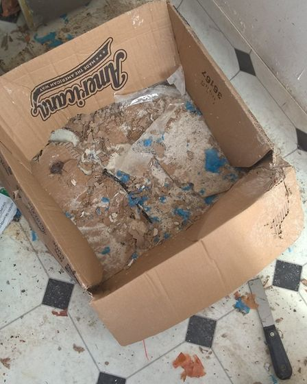 Shredded box showing evidence of rats