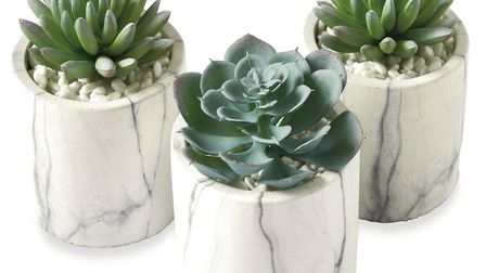 Set of three marble effect succulent pots, with faux plants, £18, Next (Picture credit: PA Photo/Han