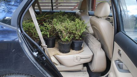 Remember to take your plants out of the car promptly when you return from the garden centre (Picture