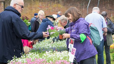 Markyate Plant Sale 2018. Picture: Rebecca Fennell Photography