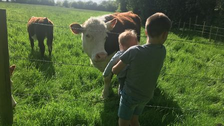 Two of Emma's sons with Hereford cows at Hammonds End in Harpenden. Picture: Emma Roberts