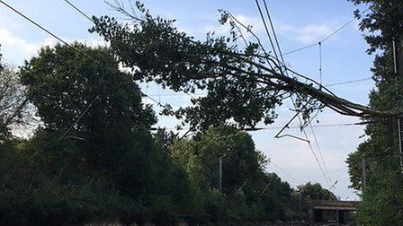 The tree branch caused delays. Picture: Thameslink