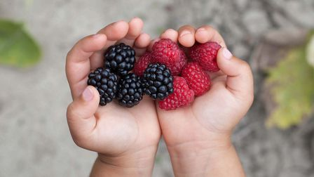 Deborah's young daughter has been enjoying picking raspberries for the first time. Picture: Getty
