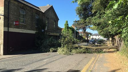 The tree fell outside Premier Stores in Melbourn High Street. Picture: Guann-Yeu Chin