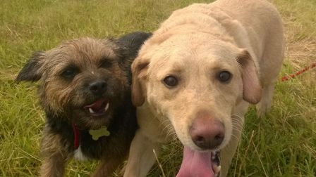 Bark in the Park is to take place on Thefield Heath this weekend