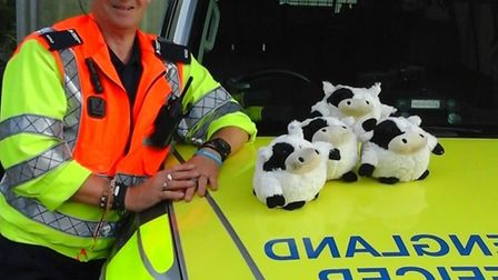 A Highways England officer with some of the escaped 'cattle'. Picture: HIGHWAYS ENGLAND