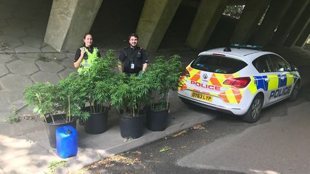 PC Bez Joy and PC Eleri Powell today with the cannabis plants from Bedmond Lane. Picture: Stuart Che
