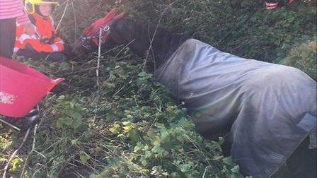 The horse that was trapped in a ditch in St Neots