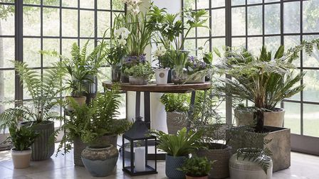 Some of the houseplants available from Dobbies Garden Centres. Picture: Dobbies/PA