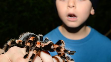 Halloween event at Whipsnade Zoo. Picture: ZSL