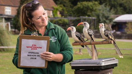 Weigh-in at ZSL Whipsnade Zoo. Picture: ZSL