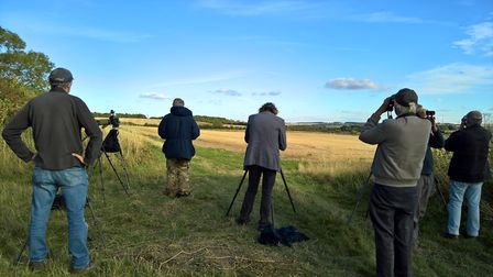 Birders lined up on the Icknield Way trying to spot the pallid harrier, the first record for Herts.