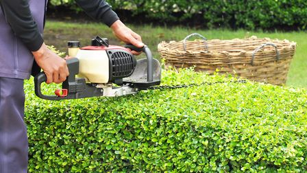 Hedge trimming can feel like a chore - but the effort's always worth it. Picture: Getty