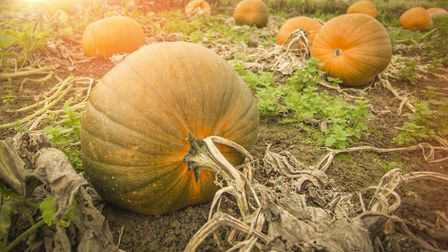 Willows Activity Farm's annual Pumpkin Festival. Picture: Supplied by Willow Activity Farm.