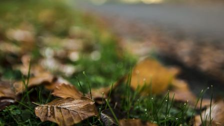 The leaves are falling, as is the rain. Picture: Getty