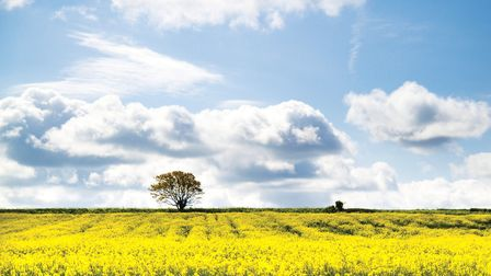 Great Chesterford is surrounded by stunning countryside; Image: ERDL