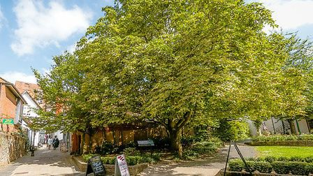 The Verdun horse chestnut tree in St Albans. Picture: Rob Grange