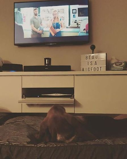 "Rosie wrote: ""@amyschumer Eric the basset hound likes 'I feel pretty'. My silly dog literally lay th"