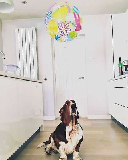 Rosie's gorgeous basset hound is just one of the many dogs she's owned over the years. Picture: @ros