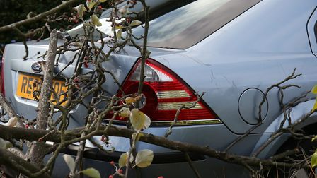 The damage done to Gill Owen's car after a tree fell onto her drive during high winds on Charmouth R