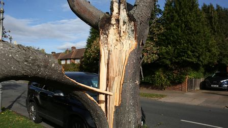 The fallen tree outside Gill Owen's house on Charmouth Road. Picture: DANNY LOO