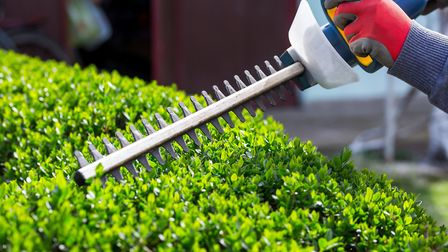 If you tidy evergreen hedges now, they will look neat until next year. Picture: Thinkstock/PA.