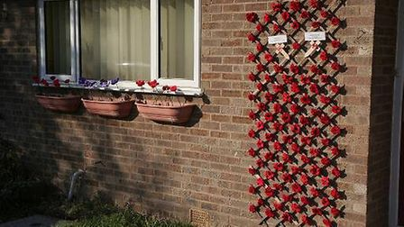 100 poppies in Wood Lane Ramsey to mark the centenary of the end of the Great War