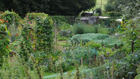Westfield Road allotment Harpenden.