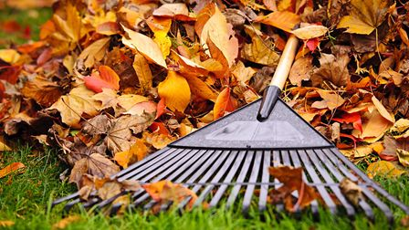Keeping on top of leaf-gathering will make it a less daunting task in the long term. Picture: Getty