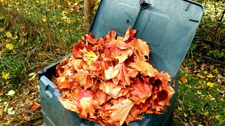 Putting the collected leaves in your compost bin will add nutrients to your compost. Picture: Getty