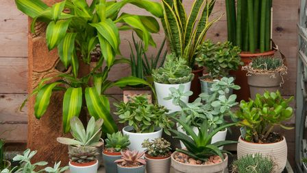 There is a wide variety of indoor plants to choose from. Picture:Tim Sandall/ RHS/PA.
