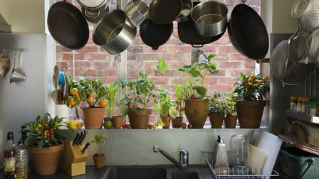 Houseplants are great at capturing little airborne dust particles that would otherwise be breathed i