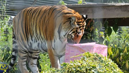 Amba had been at Shepreth since 2001. Picture: Amber Welch