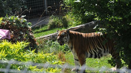 Visitors turned out to Shepreth Wildlife Park to see Amba on her birthday each year. Picture: Amber