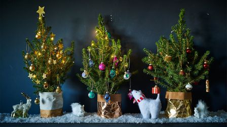 2. These mini letterbox trees can be planted in the garden after Christmas. Picture: Bloom & Wild/PA