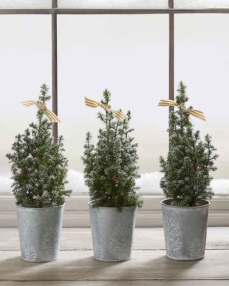 3. A trio of frosted trees fits perfectly on a window sill. Picture: Marks and Spencer/PA.