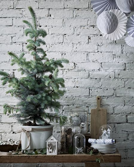 6. Eco-friendly gardeners may prefer a smaller version of the traditional Christmas tree, such as th