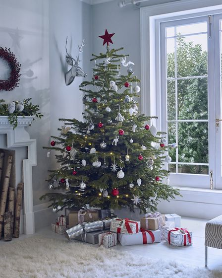 Let It Snow: Real christmas tree, from £29.99; Red Berry Wreath, £24.99; Silver Stag Head, £99.99; R